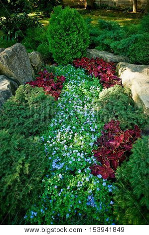 A garden with ground covers and conifers, decorated with stones and boulders