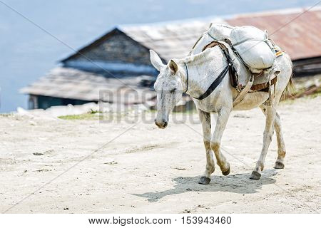 Photo of loaded horse in the mountains