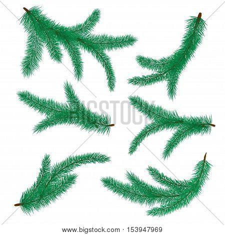 Vector illustration of fir branch. Christmas tree symbol. Set of fir-tree branches