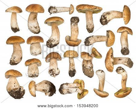 Set of porcini mushrooms isolated on a white background. Cep isolated. The natural color and texture