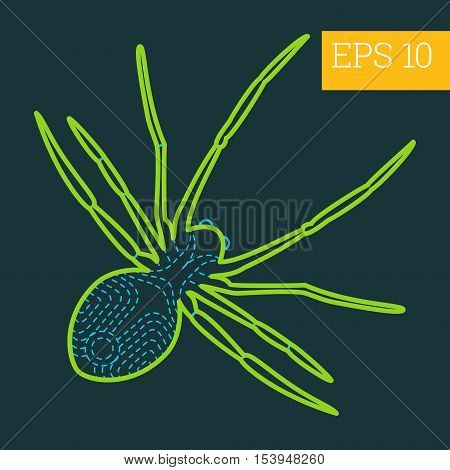Spider Insect Outline Vector