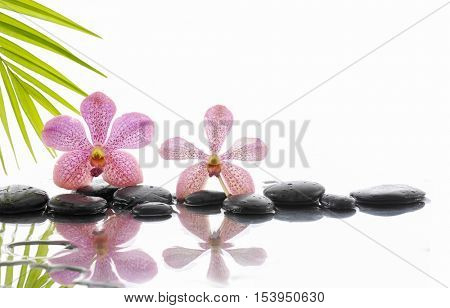Still life with zen stones and pink orchid ,palm