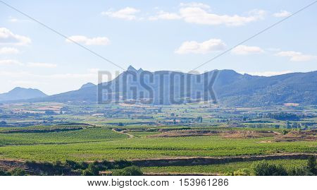 View on the vineyards of the Rioja Alta wine region near Haro La Rioja Spain