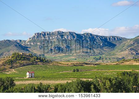 Vineyards In Haro, La Rioja, Spain
