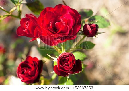 Bunch of flowers. flower bouquets. flower and beautiful petals