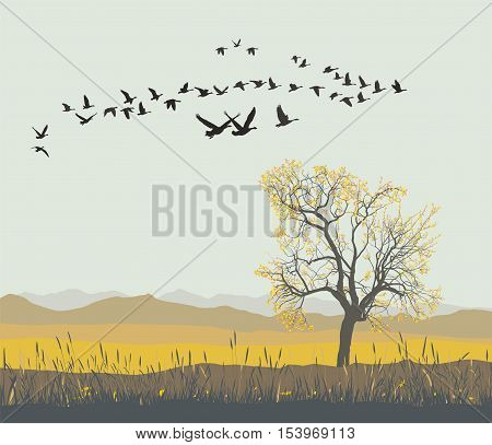 Vector illustration of migration pattern of flock wild geese