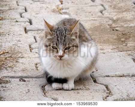 cor has been poor cat something-cat pictures,
