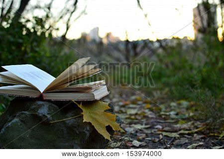 Open book of poetry outdoors with fallen leaf on it