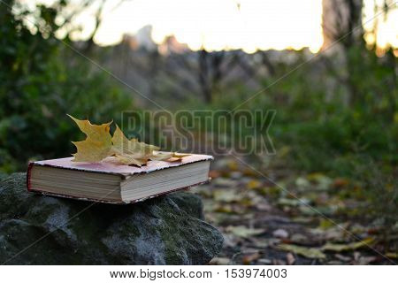 Vintage book of poetry with fallen leaf on it