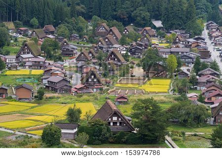 Shirakawago Japan - September 23 2016: Aerial view on the center of Shirakawago shows many of the brown farms with the special Joined-hands roofs. Colored by yellow rice paddies and green forests.