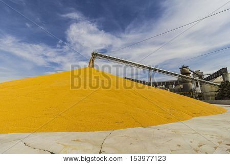 Corn and Grain Handling or Harvesting Terminal. Corn Can be Used for Food, Feed or Ethanol I