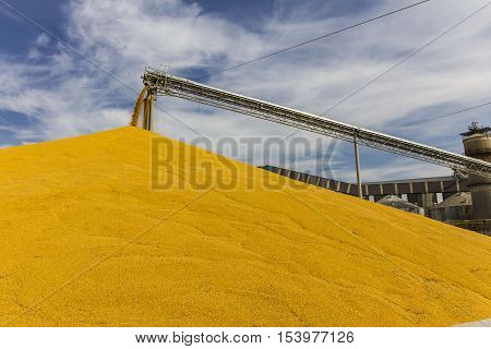 Corn and Grain Handling or Harvesting Terminal. Corn Can be Used for Food, Feed or Ethanol II