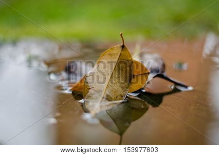 colorful autumn leaves floating in the water