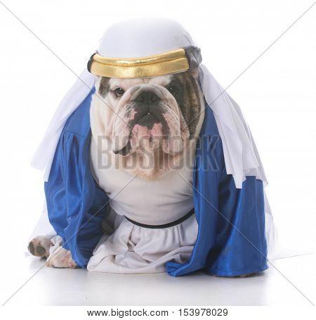dog wearing a sheik costume on white background