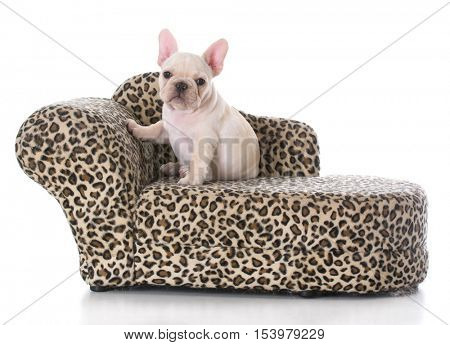 french bulldog puppy sitting on a couch