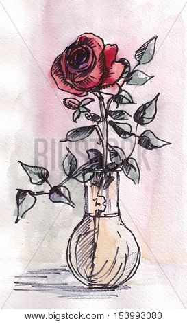 Red rose in the glass vase, summer