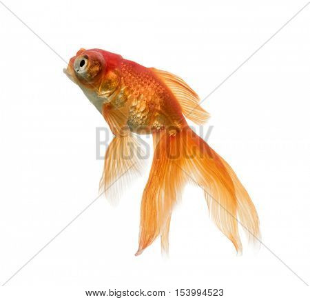 Side view of a Goldfish looking up