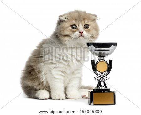 Young Highland Fold kitten with a trophy, looking away isolated on white