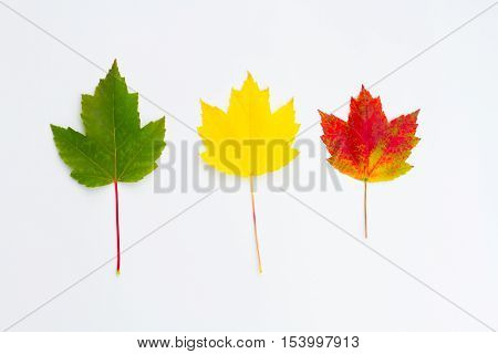 Leaves in a pattern on white background.