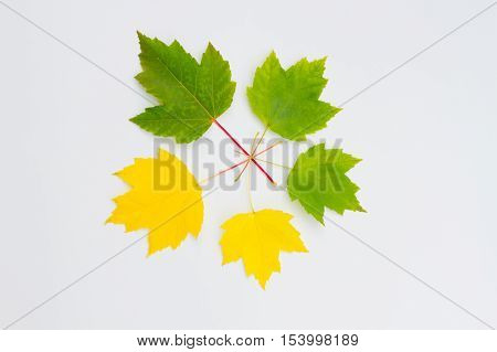 Green and yellow leaves on a white background.