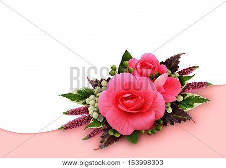 Begonia flowers arrangement on white and pink background