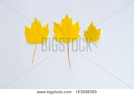 Three yellow leaves in a row on a white background.