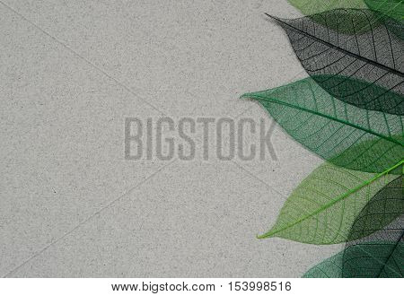 Gray paper background with green leaf skeletons