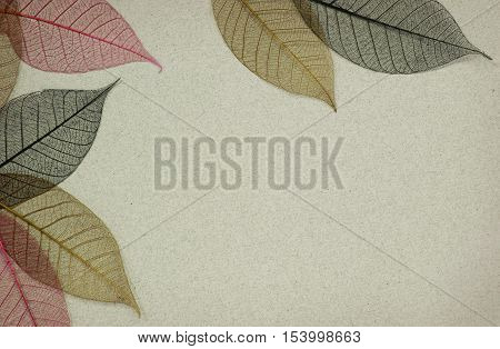 Gray paper background with red and brown leaf skeletons