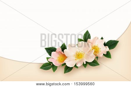 Briar flowers arrangement on white and pink background