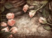 Grungy pink roses composition on stones with waterdrops poster