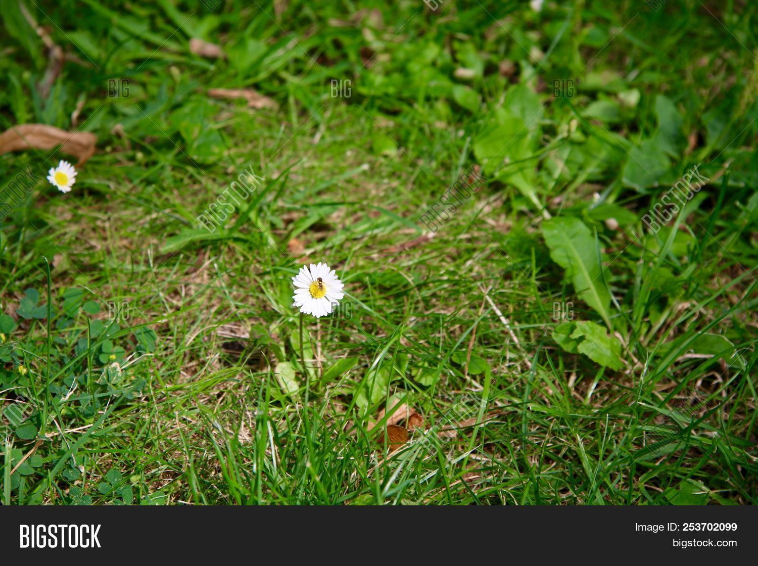 Insect On Small White Image Photo Free Trial Bigstock