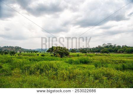 Tropical Landscape On Cloudy Sky In Boca De Valeria, Brazil. Green Trees On Summer Meadow, Tropical.