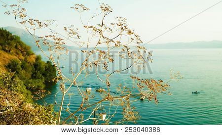 Close up of dried plant and beautiful water of Ochrid Lake, Macedonia. Balkan nature and travel concept. poster