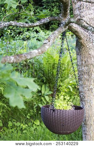 Flower Pot Hanging On Tree In The Garden