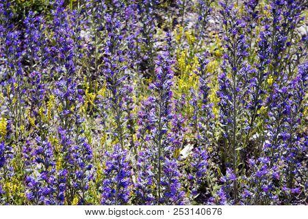 Big Meadow Wit Lots Of Beautiful Flowers