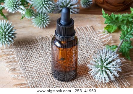 A Bottle Of Glandular Globe-thistle Tincture With Fresh Blooming Echinops Sphaerocephalus Plant