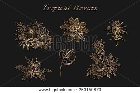 Tropical Flowers In A Set Of Vector. Isolated Black Outline