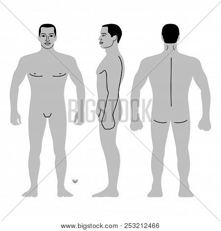 Fashion Man Body Full Length Template Figure Silhouette (front, Back And Side Views), Vector Illustr
