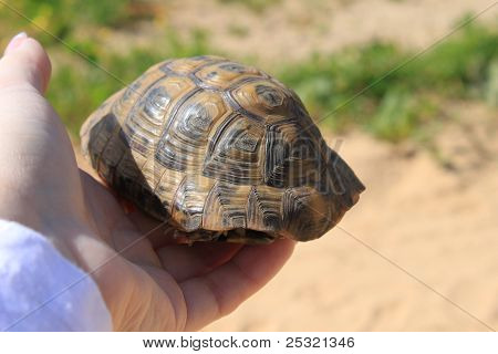 Turtle on the hand