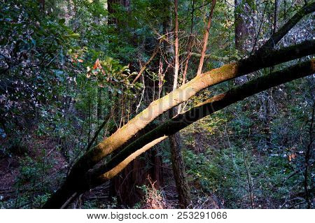 Sunlit Tree Branch In Pacific Northwest Forest