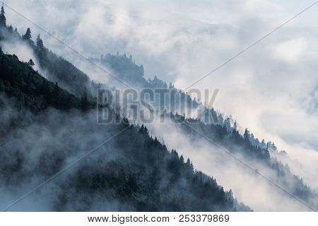 Forested Mountain Slope In Low Lying Valley Fog With Silhouettes Of Evergreen Conifers Shrouded In M