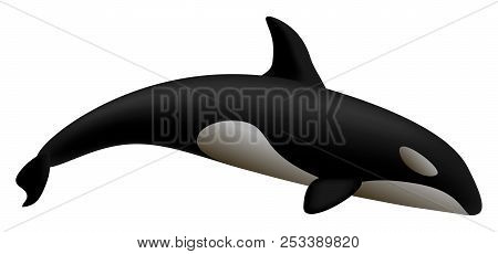 Orca Whale Mockup. Realistic Illustration Of Orca Whale Mockup For Web Design Isolated On White Back