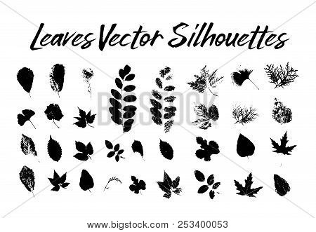 Black Silhouette With Leaf Of Rowan Or Sorb, Ginkgo And Maple, Hop And Thuja, Aspen And Birch, Hornb