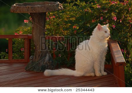 White Cat on Deck