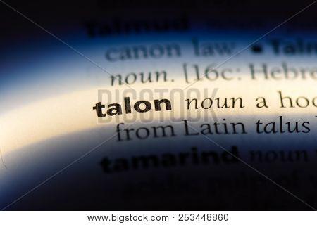 Talon Word In A Dictionary. Talon Concept.