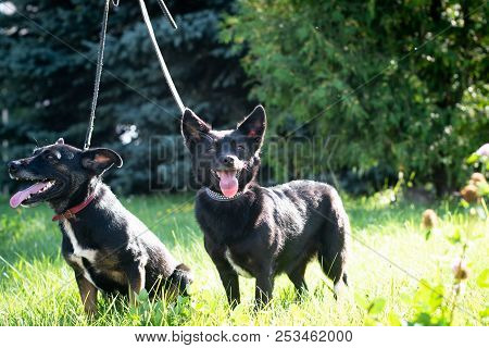 Black Dogs Outdoor In Summer Forest Green Lawn Grass