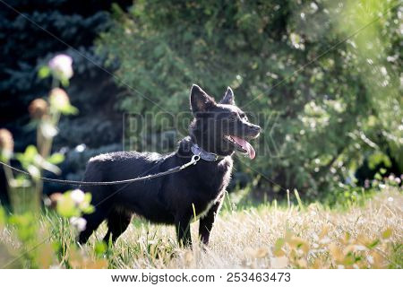 Black Dog Outdoor In Summer Forest Green Lawn Grass