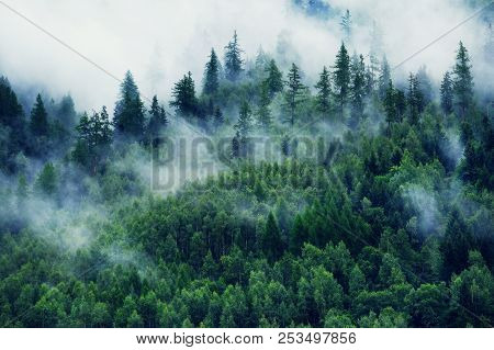 Misty Landscape With Fir Forest. Morning Fog In The Mountains. Beautiful Landscape With Mountain Vie