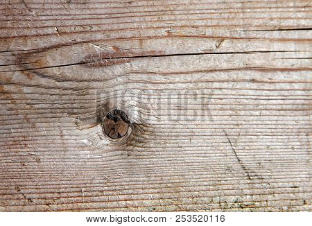 Natural Textured Background Wood Texture  Macro Shot