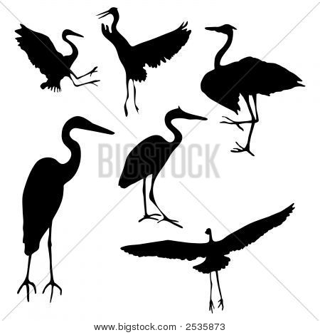 Great Blue Heron Collection.Eps